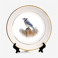 pitureplate-blue jay.jpg