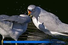 Seagull-8.jpg
