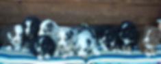 2017-10-3 puppies 085 (2).jpg
