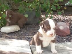 2017-10-3 puppies 021.jpg
