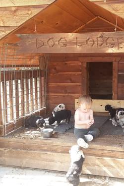 2017-10-3 puppies 062 (2).jpg