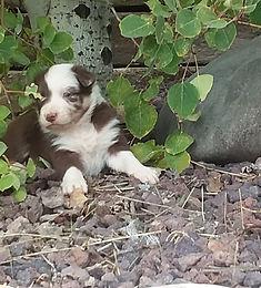 2017-10-3 puppies 076.jpg