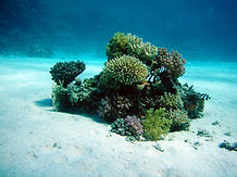coral-380039_1920.jpg