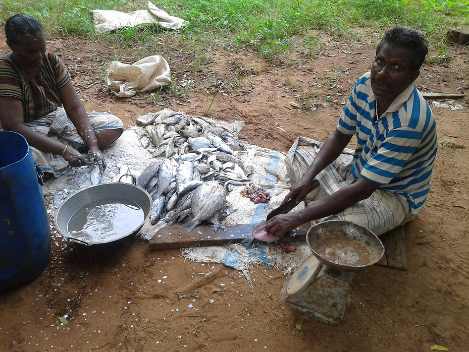 Dry fish.jpg