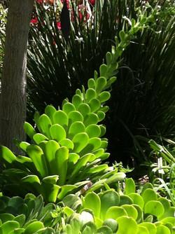 Succulent flowering torch