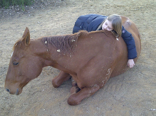 Lilly and Big Al sleeping.jpg