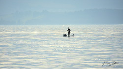 Lac de Neuchâtel/Grande Caraçaie