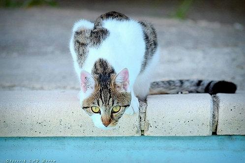 Le Chat à la piscine
