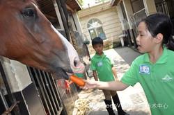 Dutch Riding Camp in Shanghai!