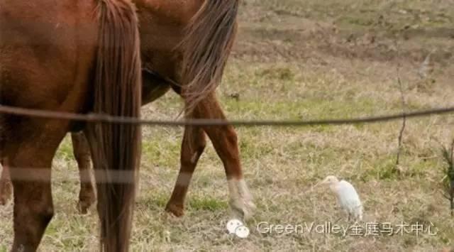 Horse can help organic farm