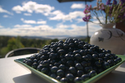 Eat local produce at the Hobart Entr