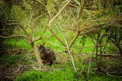 Wild life sanctuary on property