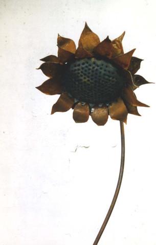 sunflwer_1.jpg