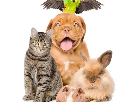Compra de Animais de Estimação e o Código de Defesa do Consumidor.