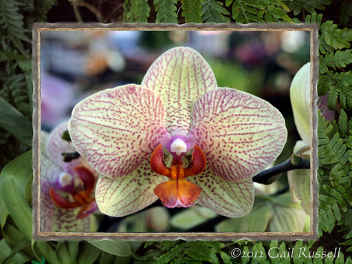 Jonathan Livingston Orchid