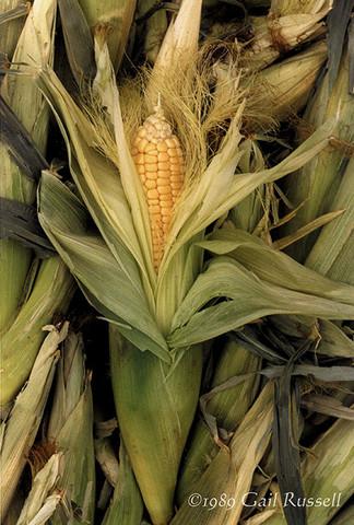 Venus of the Corn Maidens