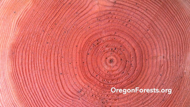 Oregon Forest Resouces Institute: Rings