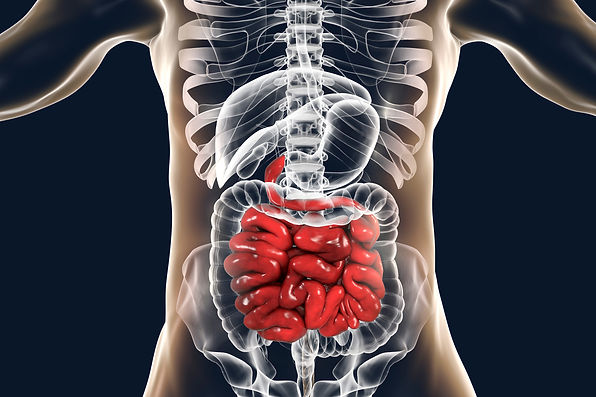 Human digestive system anatomy with high