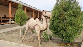 Bukhara to a Yurt - Day 9