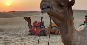 Jaisalmer - Day 14