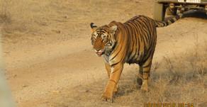 Udaipur to Aurangabad - Day 19