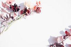 diane blossom 1.jpg
