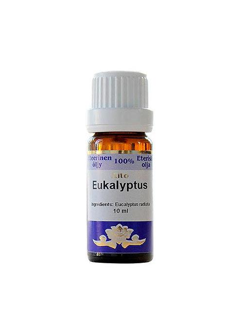 Eucalyptus / Eukalyptus, Frantsila