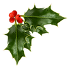 holly-berries.png