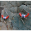 Thumbnail: Triangle earrings L.C