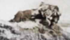 Barbary Lion - 72dpi.jpg
