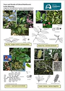 rainforoest plants.PNG