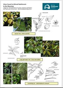 rainforoest plants4.PNG