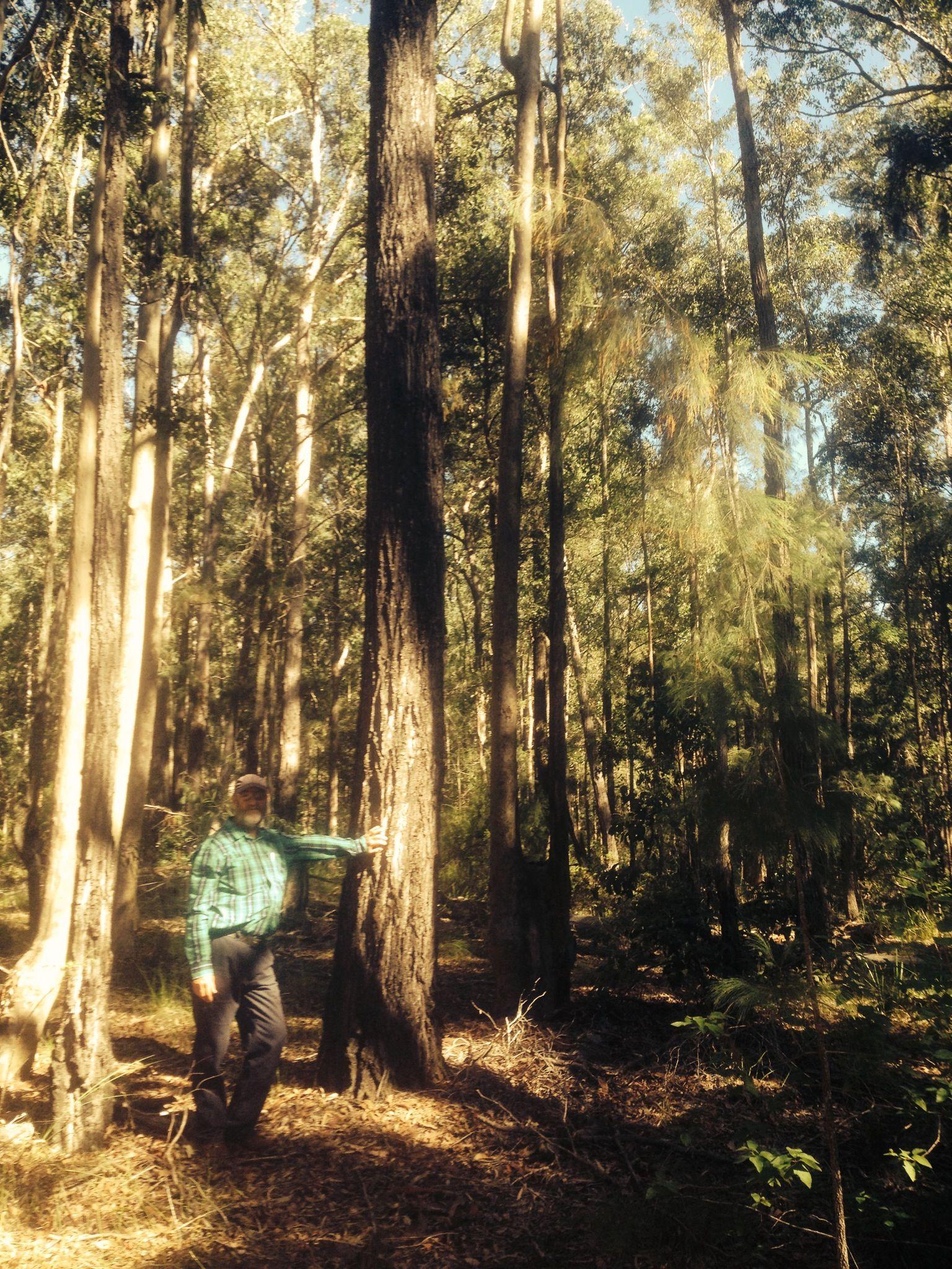 craig w tree (1)