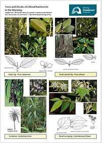 rainforoest plants3.PNG