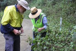 weeds-officers-examine-crofton-weed