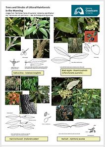 rainforoest plants2.PNG