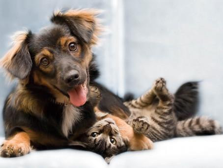 PL visa criação de Registro Nacional de Animais Domésticos