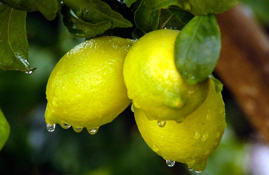 Rocio de limon