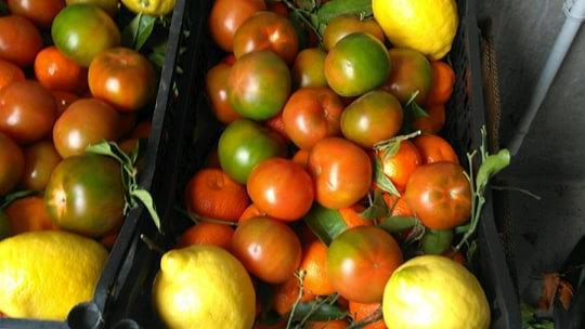 Panier de fruits et légumes 10 kg (4 choix)