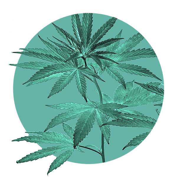 home-leaves.PNG
