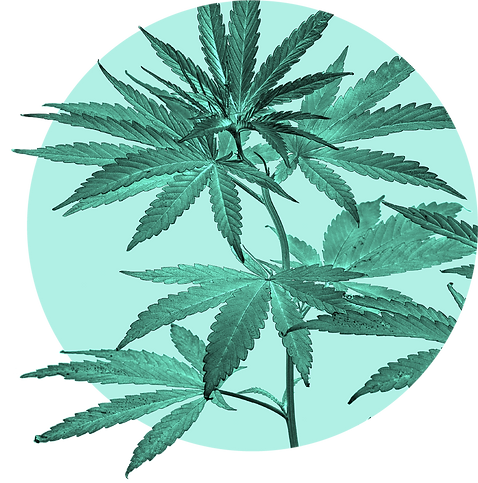 LL_LS_plant-circle.png