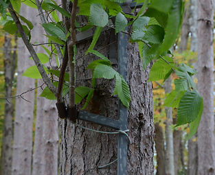 Attachment for deer hunters to add concealment to their tree stand or climbing stick