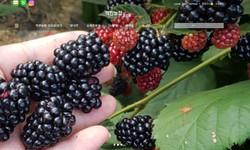 건강식품 - 착한농장