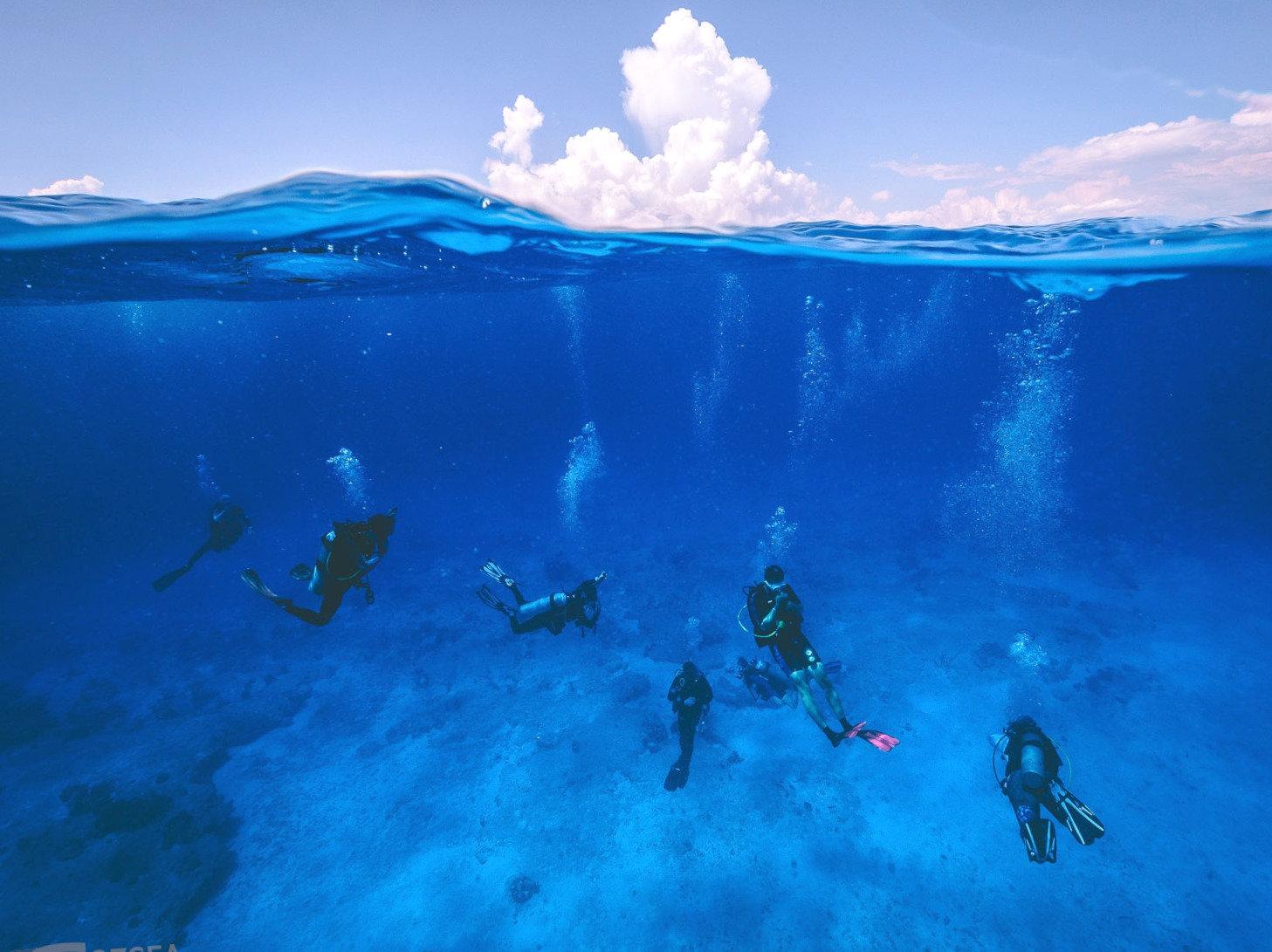 Dive Plus