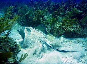 cozumel scuba diving best diving in mexi