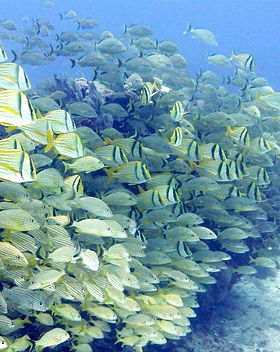 best scuba diving in mexico.jpg