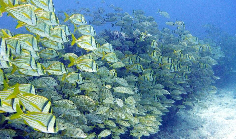 2 Tank Reef Scuba Dive