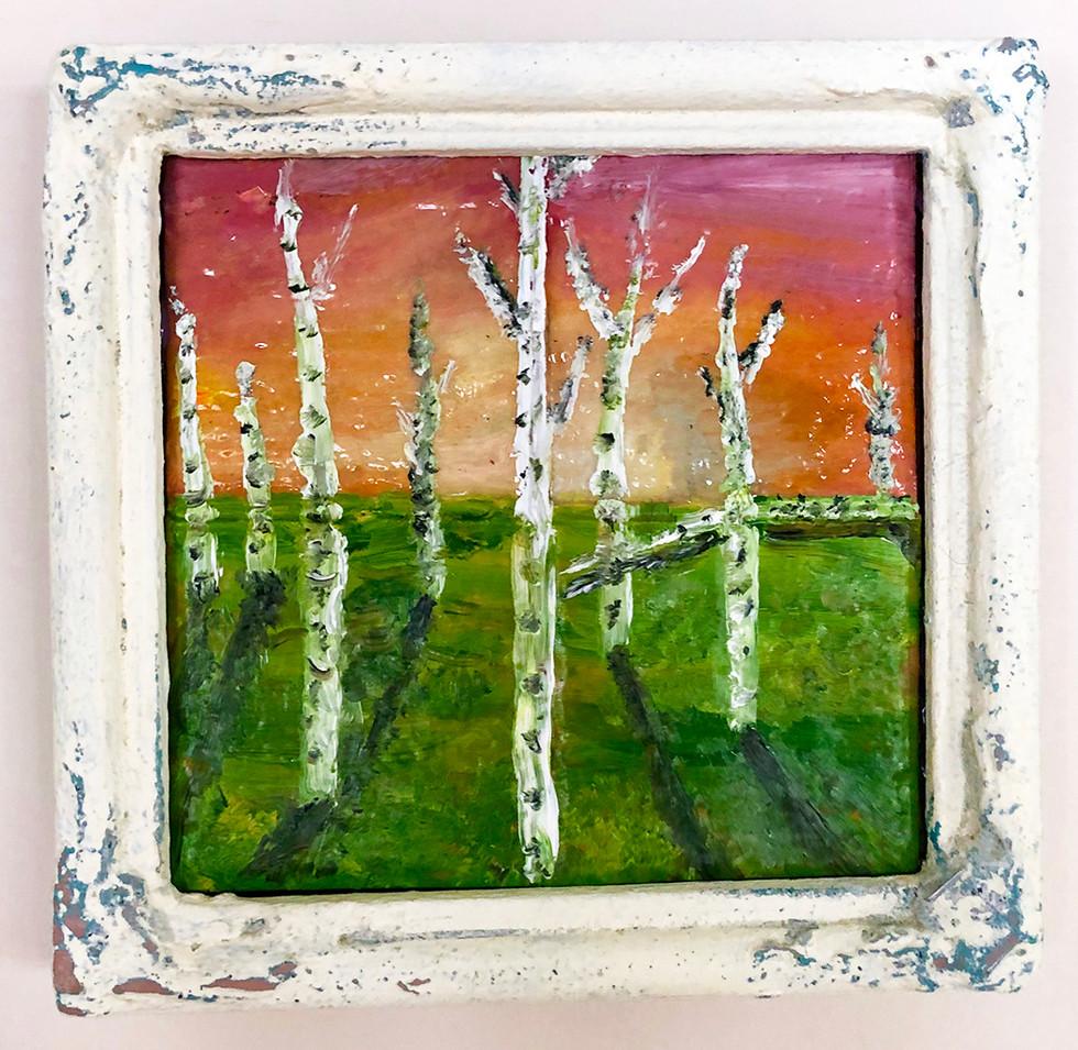 Mini Birch Trees