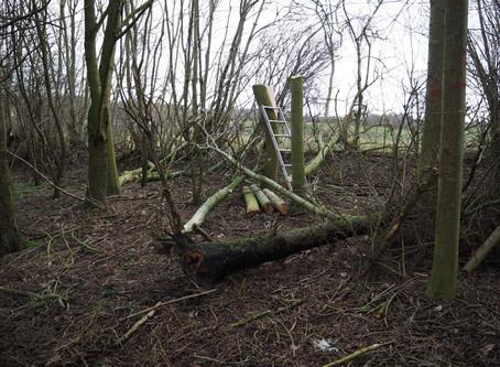 Variation i skoven