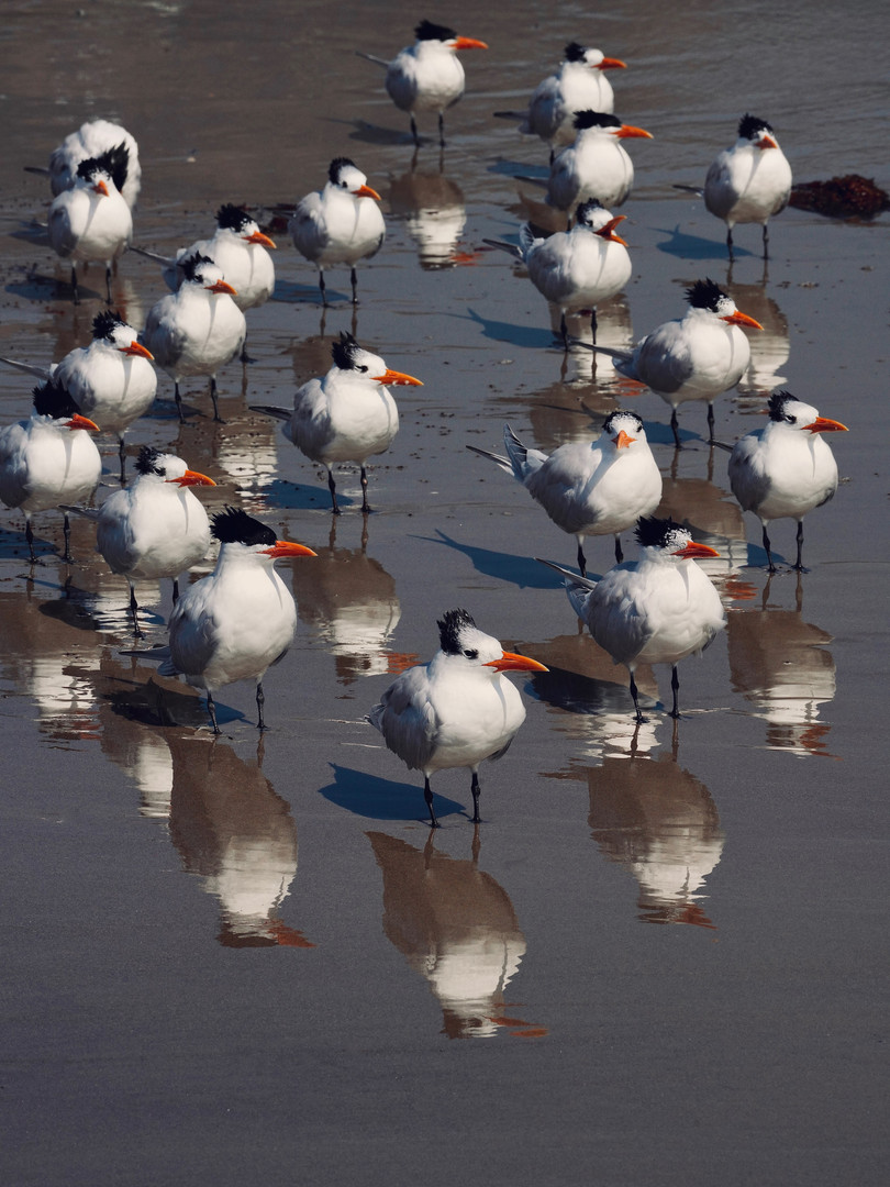 Terns Watching the Tide.jpg